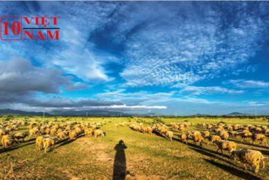 Đồng Cừu Địa Điểm Du Lịch Ninh Thuận